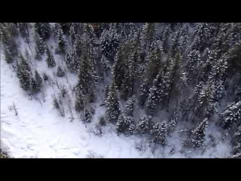 Пара диких козлов в зимнем лесу. Видео снято парапланеристом