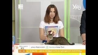 �������� ���� Пристраиваем брошенного кота: Юкс ищет новый дом и более ответственных хозяев ������