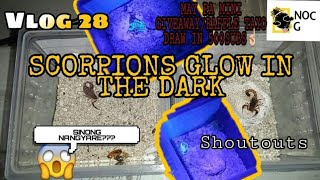 VLOG 28 SCORPIONS GLOW IN THE DARK | MINI RAFFLE/GIVEAWAY (SHOUTOUTS)