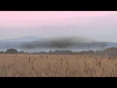 Starling Murmuration in Maremma Tuscany