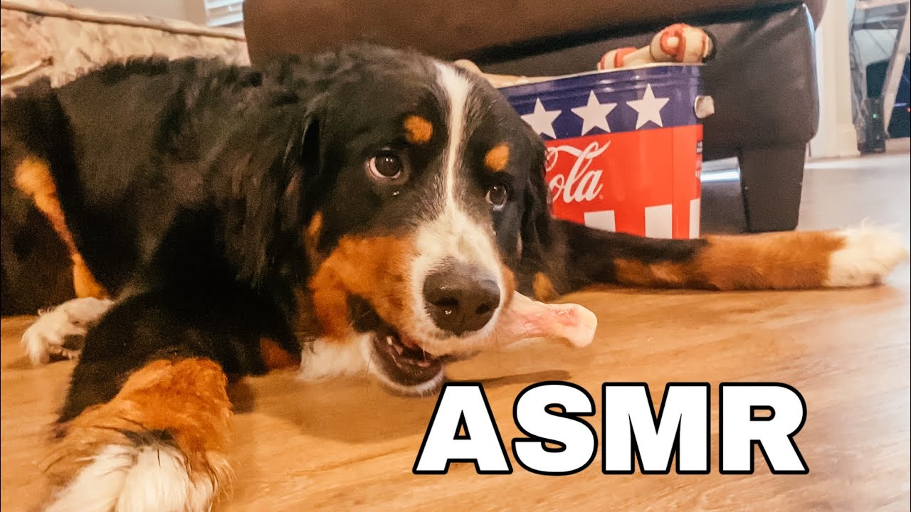 My Dog Eats A Raw Chicken Leg | ASMR