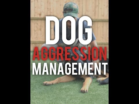 How to properly manage DOG AGGRESSION!- America's Canine Educator