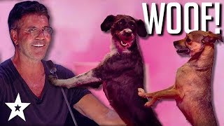 Simon Cowell's No. 1 DOG ACT on Britain's Got Talent: The Champions 2019 | Got Talent Global