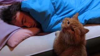 Милый рыжий кот ждет, когда проснется хозяин / Смешные, забавные приколы 2015 / Funny animals