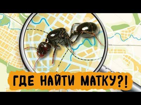 Новая карта муравьев России и СНГ - AntsMap.ru
