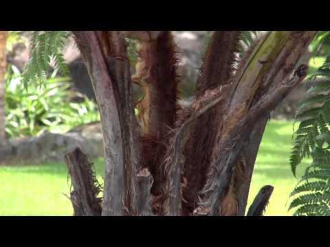 Imiloa Gardens: Gardenia and Hapu`u