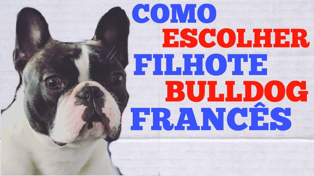 Como escolher um filhote bulldog franc s youtube - Bulldog frances gratis madrid ...