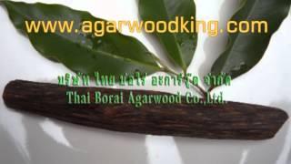 Thai Borai Agarwood Co.,Ltd.,We are the  biggest manufacturer of agarwood oil distillation plant