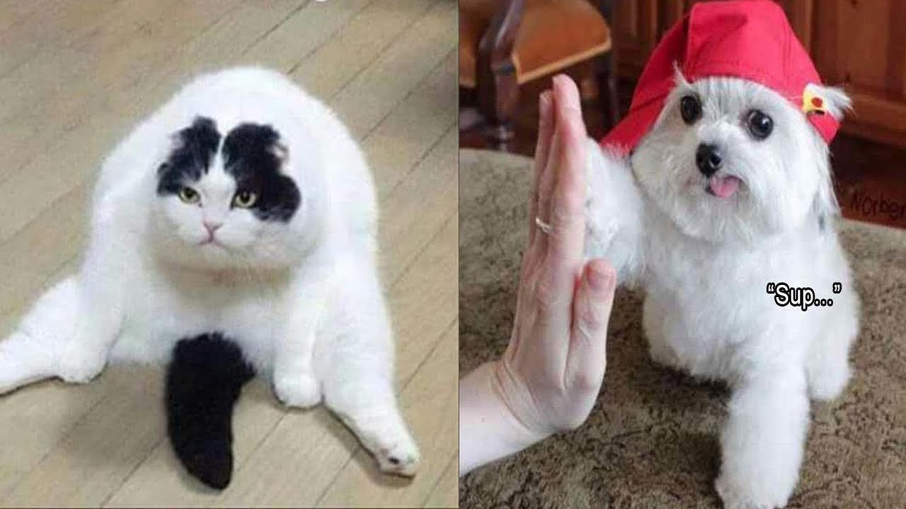 Pics of funny animals by SmilesTV