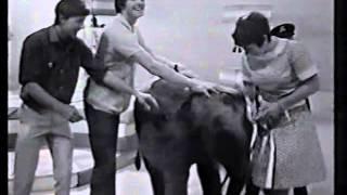 Blue Peter Highlights - Rocky & Hoppy + Lulu / John Noakes - a Legend!