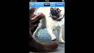 Scared Pug - Real Funny Pictures