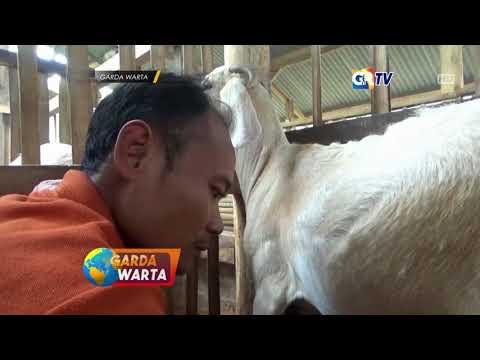 ngawi---sabun-kecantikan-terbuat-dari-susu-kambing-etawa