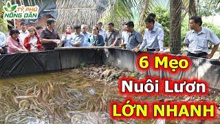 6 Kỹ Thuật Nuôi Lươn Tại Nhà Nhąnh Lớn - Hiệu Quả Kinh Tế Cao | Tỷ Phú Nông Dân