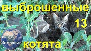 Брошенные котята. тринадцатый день. Документальный сериал про бездомных котят.