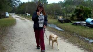 Dog Training Emily Electronic Collar Dogtra