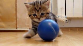Смешное видео про кошек 15, подборка 2013-2014(Смешное видео про кошек 15, подборка 2013-2014 Самые прикольные котята, новая подборка. Теги: кошки видео, смешн..., 2014-01-01T17:06:11.000Z)