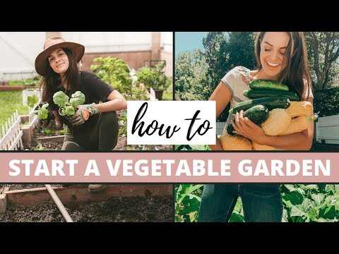 How To Start A Vegetable Garden | Gardening Tips