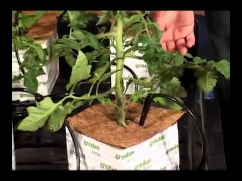 Rockwool 101 Drip Irrigation Made Easy With Grodan