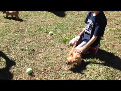 Dixie! (The Norwich Terrier)