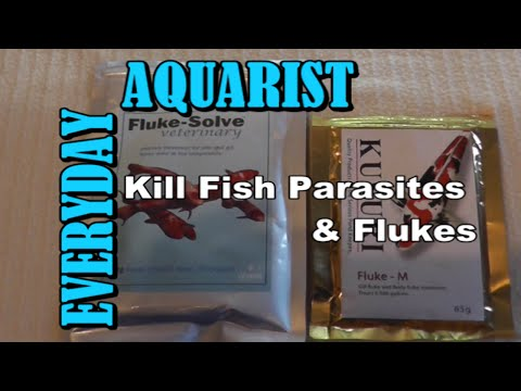 How To Kill Fish Internal Parasites