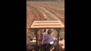 Peanut farming in south Alabama