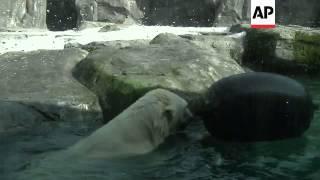 Alaska Zoo helps polar bear conservation efforts
