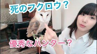 【ザッとお話】メンフクロウの説明