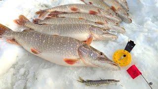 За щукой в ХМАО Северная рыбалка на Оби Февраль 2020 Первая серия