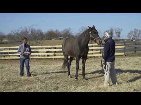 TAA Eclipse Awards Video