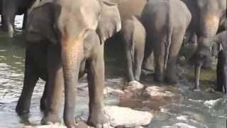 Elephant Safari at Pinnawala Sri lanka.wmv