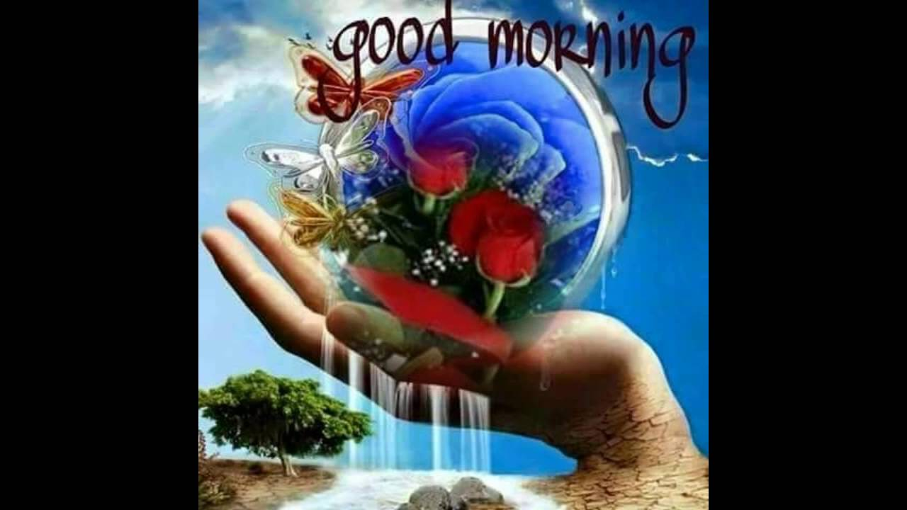 Good Morning Flowers For You Wishes Greetings Sms Sayings Quotes E card Wallpapers Whatsapp video