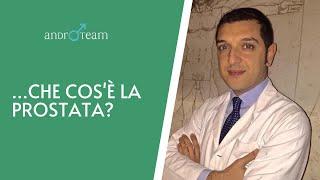 Che cos'è la prostata? Che problemi può avere?   L'andrologo risponde #05