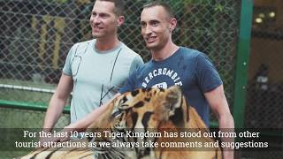 Tiger Kingdom Roaring Forward - Full Clip