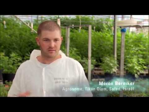 RTS (radio television suisse) - Tikun olam and the Medical Cannabis in Israel