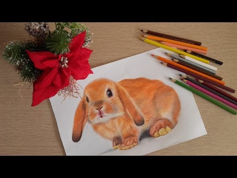 Как раскрасить зайца цветными карандашами