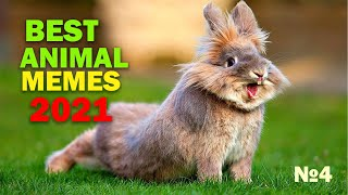 TRY NOT to LAUGH Animals FUNNY PET FAILS Compilation 2021 | Epic Pet Videos & Moments