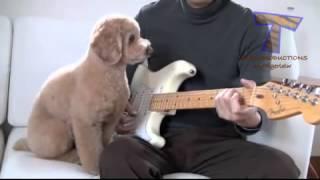 животные и музыка
