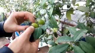 видео Вырастить Растение На Заказ Барнаул