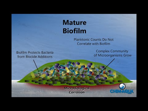 How Biofilms Form