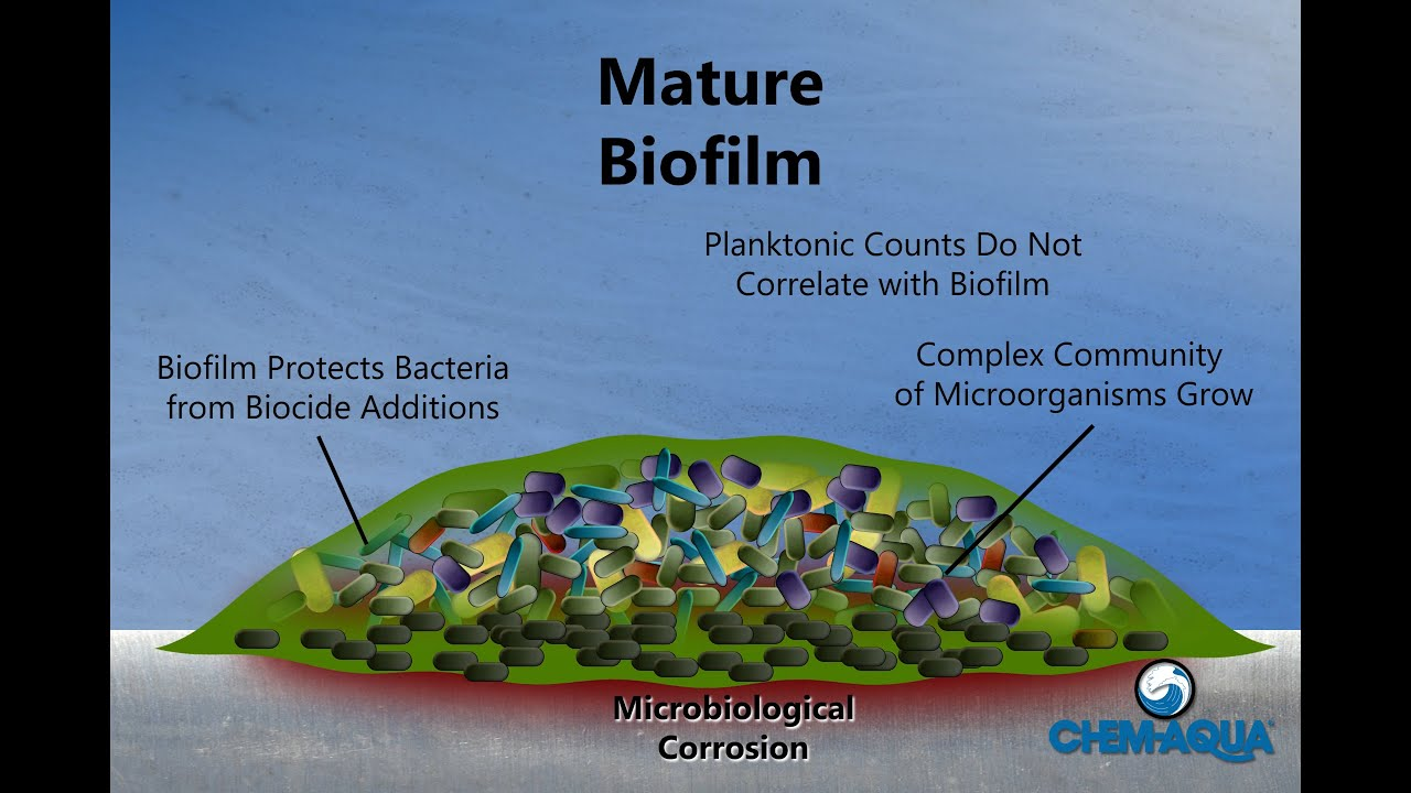 How Biofilms Form - YouTube