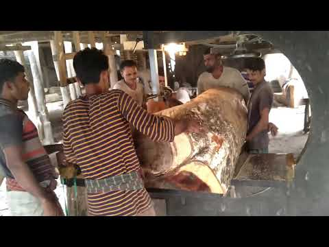 Skilled! Huge & Massive Wood Cutting by 18 Powerful Skilled Workers।Rain Tree Wood Cutting by Slice