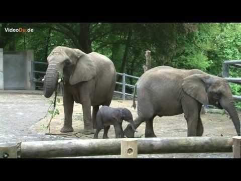 Elefantenbaby im Zoo
