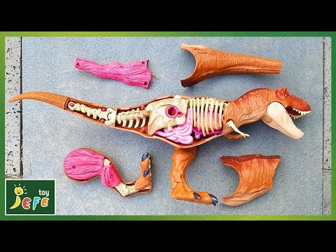 Giant Dinosaur Jurassic World Tyrannosaurus Rex Anatomy. Find and assemble the pieces!ㅣJefeToy