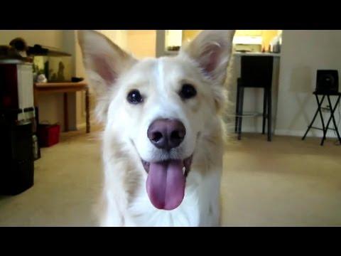 Dexter's Adorable Dog Tricks!