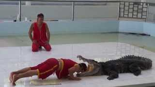 Crocodile farm show. Phuket. Part 2. Шоу крокодилов. Пхукет. Часть 2