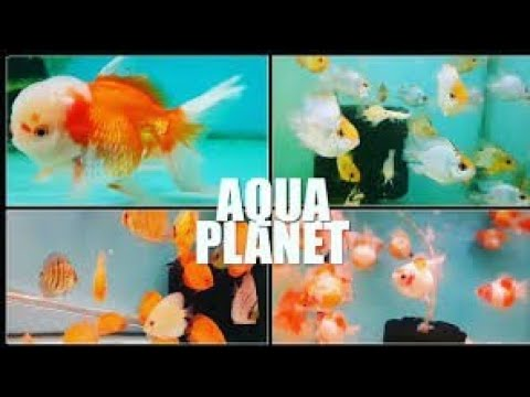 kurla fish market (AQUA PLANET)