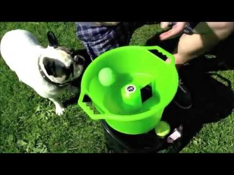 automatic throwing machine for dogs