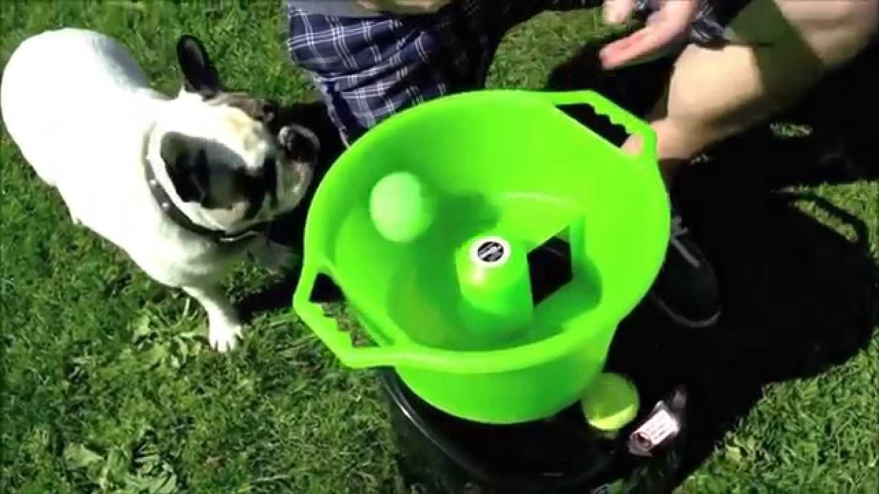 godoggo fetch machine automatic ball thrower for dogs youtube