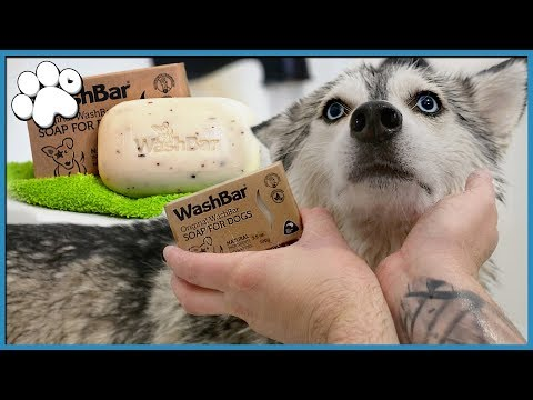 Trying Out NATURAL Dog Soap