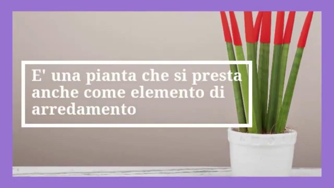 Piante Da Arredo Appartamento piante da appartamento: le 8 migliori per la nostra casa